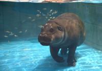 オープン5カ月足らずで来館者100万人突破!                  海遊館プロデュースの水族館「NIFREL」(ニフレル)
