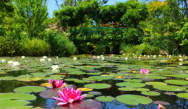 【つぎ、どこ行こ!?】緑と水と歴史に心和ませて 夏の比叡山・琵琶湖をぐるり周遊