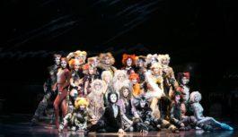 劇団四季ミュージカル「キャッツ」大阪公演が開幕 熱演13年ぶり 誇り高い猫たちが問いかける