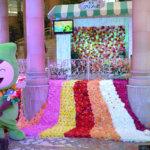 宝塚にダリア1万本の花飾り 全国有数の産地・上佐曽利地区