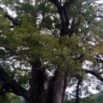 大阪・能勢町で空き家活用をコーディネート 「野間の大けやき移住ネットワーク」