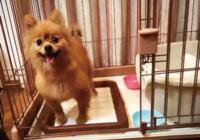 「ワンちゃん(保護犬)譲渡会」 4月8日(土)西宮市本町の狸穴庵で