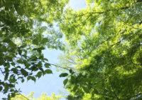 あなたの心に残る新緑の景色はどこですか? 京都・北野天満宮「史跡御土居の青もみじ」5月31日(水)まで特別公開