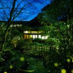 初夏の太閤園で「ホタル物語」 ホタル観賞&ディナーを楽しむ 25日(日)まで 縁日やゴスペルも