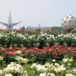 万博記念公園でローズフェスタ開催中 バラ約5600株が見ごろ<br />ハンドマッサージなどイベント多数