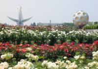 万博記念公園でローズフェスタ開催中 バラ約5600株が見ごろハンドマッサージなどイベント多数