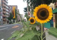 """大阪・大淀エリアで""""夏の花見"""" 黄色を身に着けると「小さな幸せ」 町おこしへ飲食店が特典"""