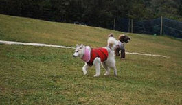 犬と一緒に秋を満喫! 六甲山のドッグラン9月2日(土)から11月5日(日)の土曜・日曜・祝日