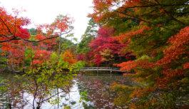 世界の紅葉狩り ライトアップも  神戸市立森林植物園 11月30日(木)まで