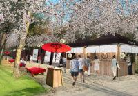 大阪城 お花見和ーべきゅう 2月24日(土)から予約開始 今年から全面有料化に