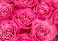 10/25(木)芦屋で開催 女性経営者を応援する「創業ウィメンズフォーラム feat. ASHIYA RESUME」