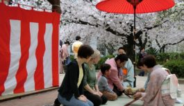 4/6(土)大阪・中大江公園で「桜まつりお茶会」能の上演や和太鼓演奏も