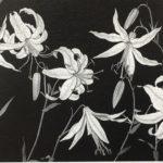 白黒で描くかれんな姿 「片山治之 野の花展 」梅田と川西の画廊で