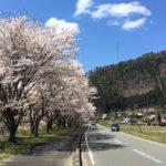 【précieux 京都】#22  2020年春。桜よ、ありがとう