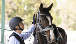 緑あふれる服部緑地公園で乗馬デビュー 先着50人を特別試乗会へ招待 10月末まで