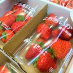 栃木のイチゴでビタミン摂取!<br />県が梅田の地下街でフェア 新品種「とちあいか」もお目見え