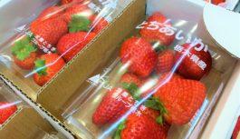 栃木のイチゴでビタミン摂取!県が梅田の地下街でフェア 新品種「とちあいか」もお目見え