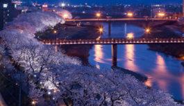 まちが「幸せ色」に染まる 第36回ふくい桜まつり 4月11日(日)まで